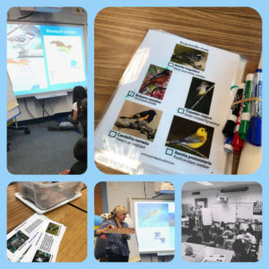 Photo Collage of Unidos por las Aves presentation